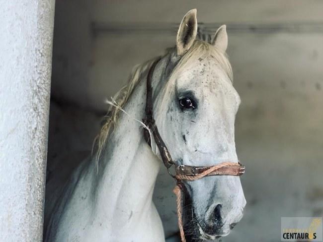 Ratunek dla konia