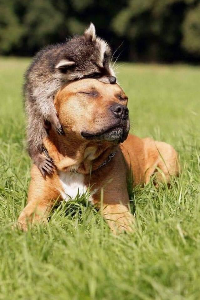 zwierzęca przyjaźń