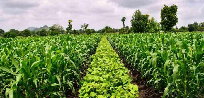Uprawy rolnice
